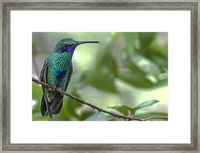 Eye For Beauty Framed Print by Andrea  OConnell