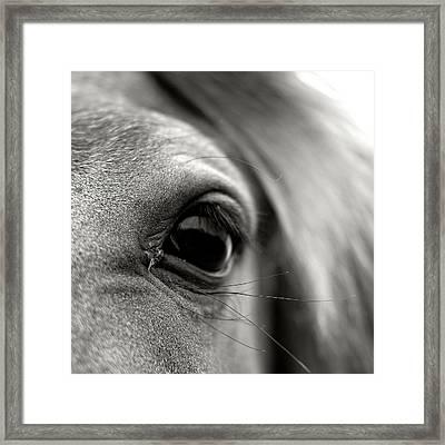 Eye Of Horse Framed Print by Gabriella Nonino
