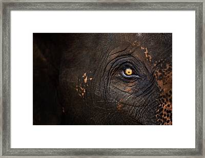 Eye Of Thai Elephant Framed Print by presented by Zolashine