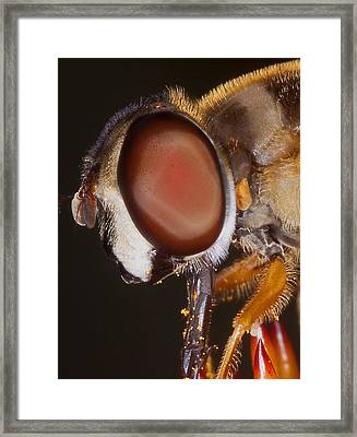 Eye Of The Fly Framed Print