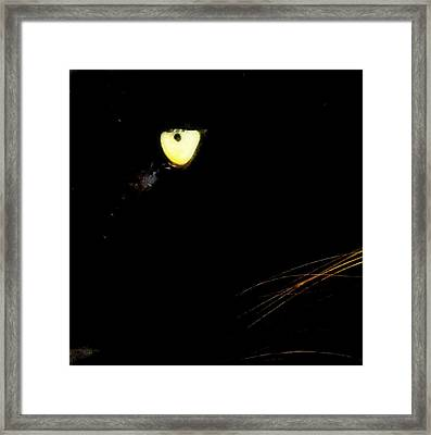 Eye Of The Panther Framed Print by Karen Wiles