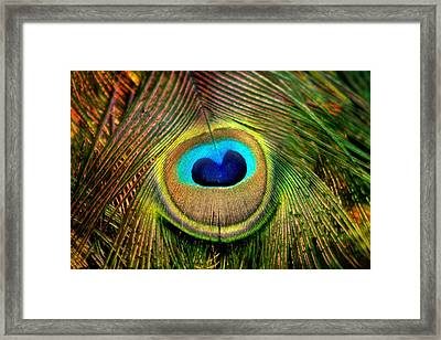 Eye Of The Peacock Feather Framed Print