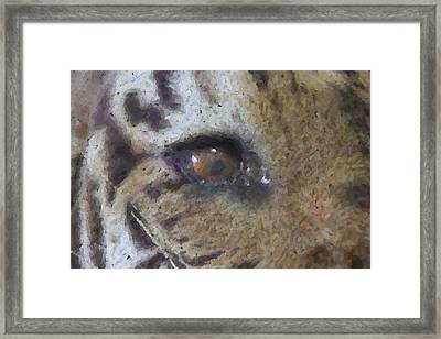 Eye Of The Tiger Framed Print by Donna G Smith