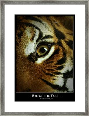 Eye Of The Tiger Framed Print by Leito R
