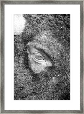 Eye See You Framed Print by Rick Rauzi
