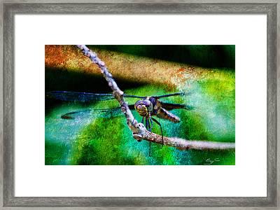 Eye To Eye Framed Print by Barry Jones