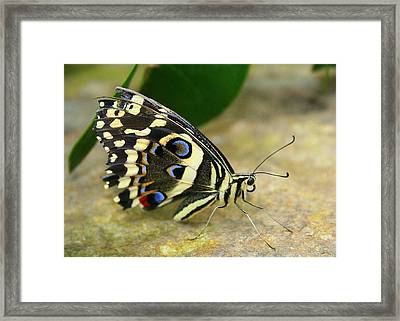 Framed Print featuring the photograph Eye To Eye With A Butterfly by Laurel Talabere