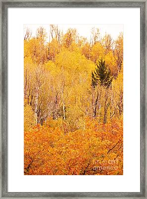 Eyeful Of Color Framed Print by Bob and Nancy Kendrick