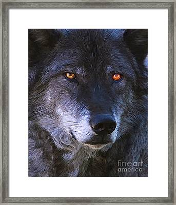 Framed Print featuring the photograph Eyes by Clare VanderVeen