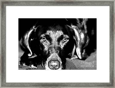 Framed Print featuring the photograph Eyes by Leslie Leda