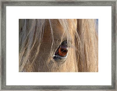 Eyes Of Beauty.. Framed Print by Al  Swasey