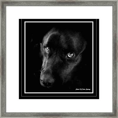 Eyes Of His Heart Framed Print by Sherri's Of Palm Springs
