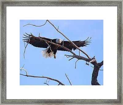 Framed Print featuring the photograph Eyes On The Prize by Jim Garrison