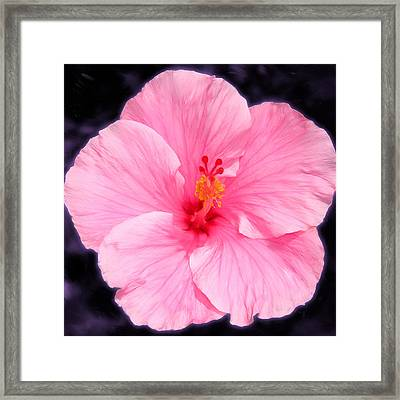 Face Hibiscus Framed Print by Marcos Porcayo