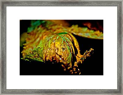 Face Leaf Framed Print by Anita Megyesi