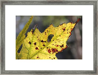Face Of A Leaf Framed Print