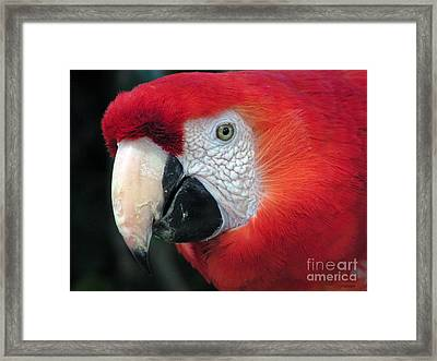 Framed Print featuring the photograph Face Of Scarlet Macaw by Alexandra Jordankova