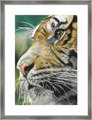 Face Of The Hunter Framed Print by Paul Miners