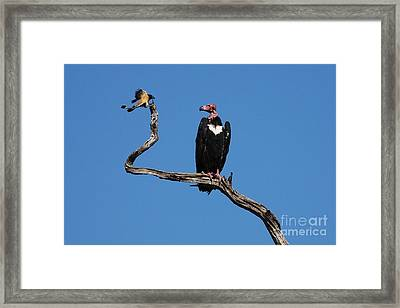 Framed Print featuring the photograph Face To Face by Fotosas Photography