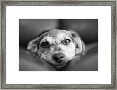 Face To Face Framed Print by Victor Bezrukov