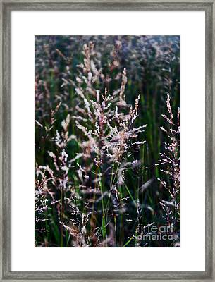 Faces In The Field Grass Framed Print by Wesley Hahn