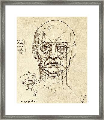 Facial Anatomy Framed Print
