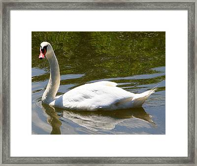 Framed Print featuring the photograph Facing The Camera by Paula Tohline Calhoun