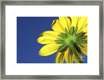 Framed Print featuring the photograph Facing The Sun by Sherry Davis