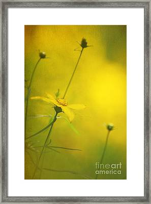 Faded Dreams Framed Print by Darren Fisher