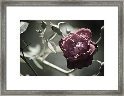Faded Flower Framed Print