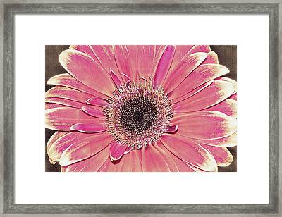 Fading Away Framed Print by Fiona Messenger