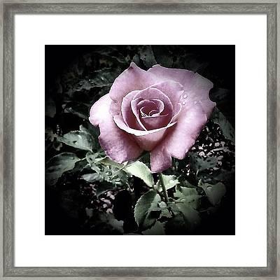 Fading Beauty - Love Always Fades Framed Print