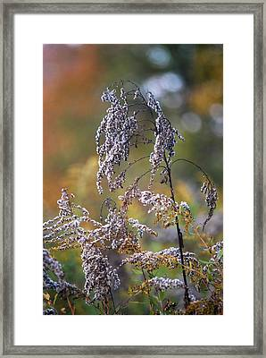 Fading Color Framed Print by Kimberly Deverell