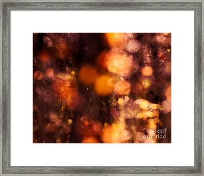 Fading Fall Flame Framed Print by Royce Howland