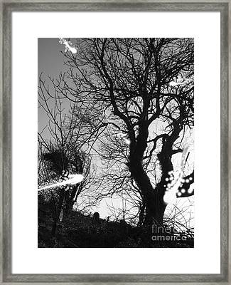 Fairies  Framed Print by Trevor Fellows