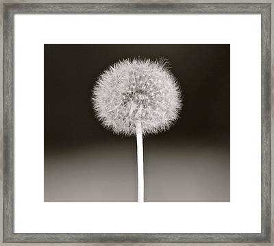 Fairy Ball Framed Print by Karen Grist