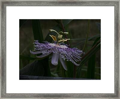 Fairy Queen Framed Print by Wide Awake Arts