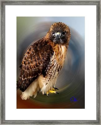 Falco 2 Tinnunculus Vf Framed Print by Colette V Hera  Guggenheim
