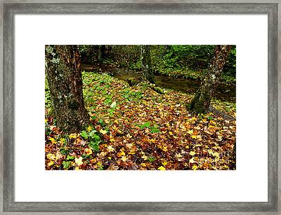 Fall Along Middle Fork Framed Print by Thomas R Fletcher
