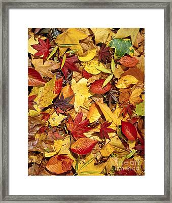 Fall  Autumn Leaves Framed Print