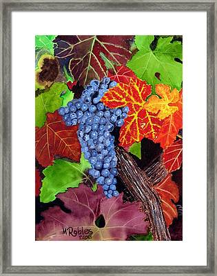 Fall Cabernet Sauvignon Grapes Framed Print