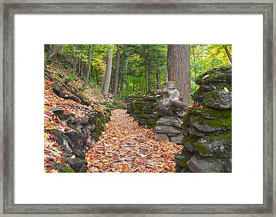 Fall Carpet Framed Print by Cindy Haggerty