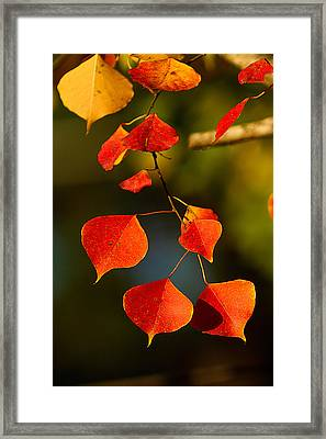 Framed Print featuring the photograph Fall Color 2 by Dan Wells