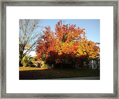 Fall Color 4 Framed Print by Remegio Onia