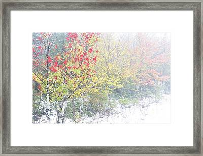 Fall Color And Snow  Framed Print