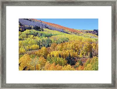 Fall Color Aspen Near Dolores Colorado Framed Print