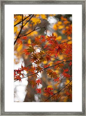 Fall Color Montage Framed Print by Mike Reid