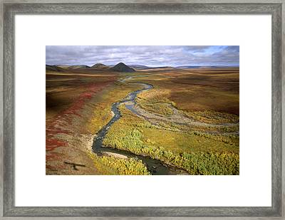 Fall Color On The Central North Slope Framed Print by Joel Sartore