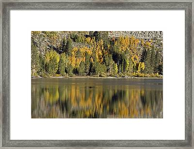 Fall Color Reflection And Tree Framed Print by Rich Reid