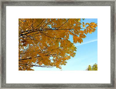 Fall Colors 111 Framed Print by Pamela Walrath